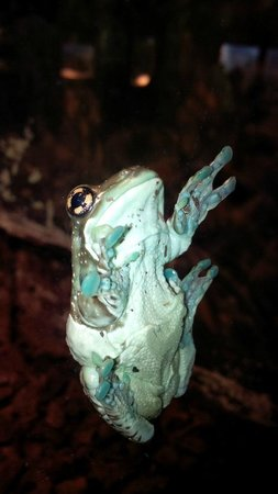 The Buffalo Zoo: sticky frog