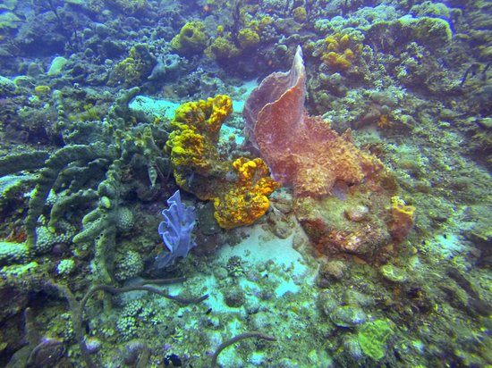 Fort Young Hotel : Coral