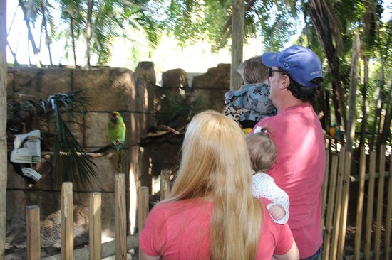 Palm Beach Zoo & Conservation Society: Joy