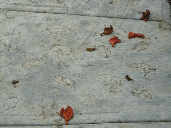 The Guest Suites at Manana Madera Coffee Estate: Leaf imprints on cement