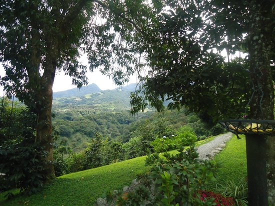 The Guest Suites at Manana Madera Coffee Estate : Scenery