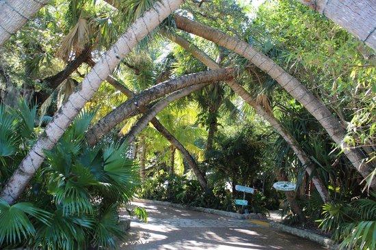 Guanabanas : Jungle atmosphere