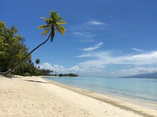 Sofitel Moorea Ia Ora Beach Resort : Beautiful beach.
