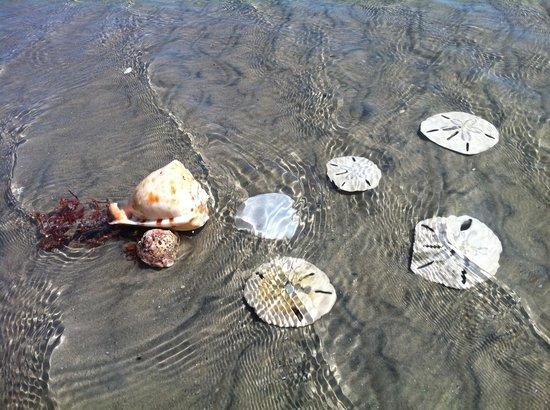 Areia Branca, RN: Praia limpa, agua deliciosa morna e cristalina com vida!