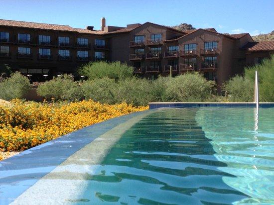 The Ritz-Carlton, Dove Mountain : Pool