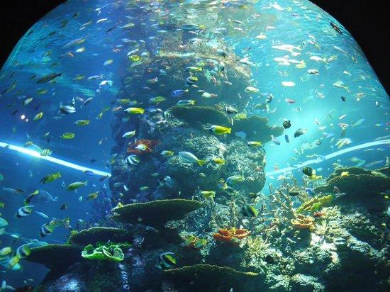 shark seas picture of s e a aquarium sentosa island tripadvisor