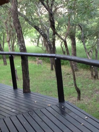 Thornhill Safari Lodge: On the deck next to our room.