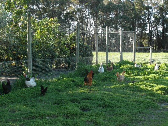 Craythorne Country House : Your Free Range Breakfas Egg Supply