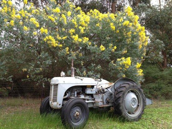 Craythorne Country House: Australian Wattle