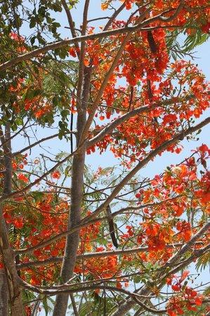 KonoKono Beach Resort : The gardens are lovely and colourful