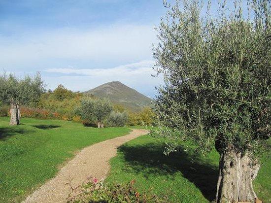 Casa San Gabriel: The Olive Grove