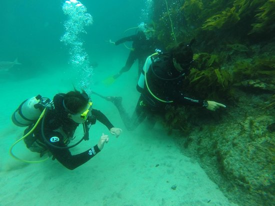Goat Island Dive & Snorkel : Always something to see down there