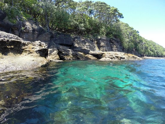 Goat Island Dive & Snorkel : Crystal clear waters