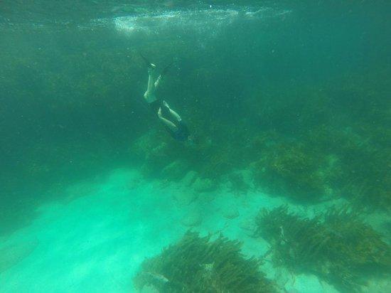 Goat Island Dive & Snorkel: Snorkel dive