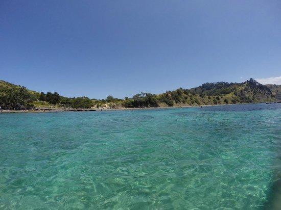 Goat Island Dive & Snorkel: Beautiful Goat Island Marine Reserve