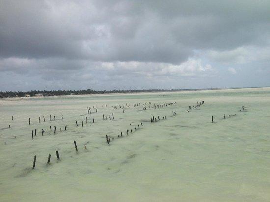 Jambiani White Sands Bungalows : огороды, где местные выращивают водоросли