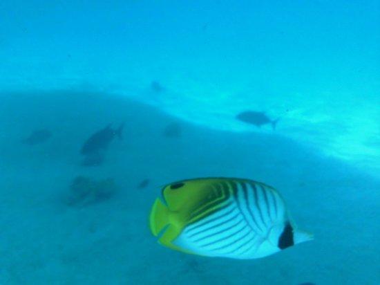 Koka Lagoon Cruises : peces
