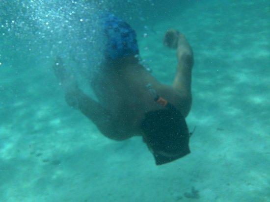 Koka Lagoon Cruises : snorkel