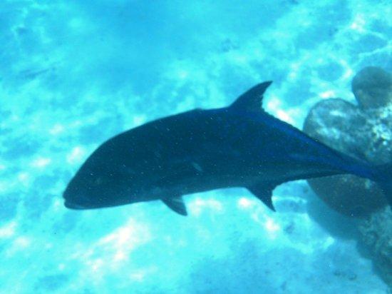 Koka Lagoon Cruises : peces arrecife