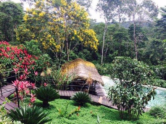 Hamadryade Lodge: Piscine avec espace transats et hamac