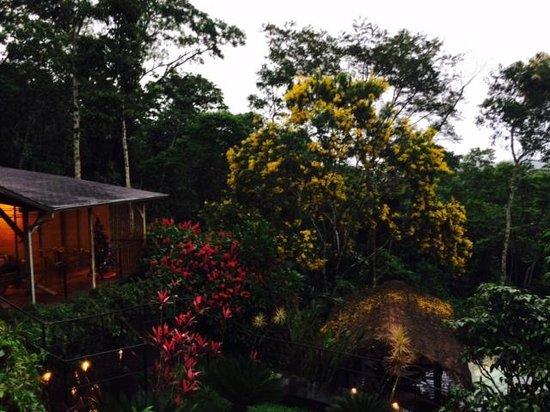 Hamadryade Lodge: Végétation