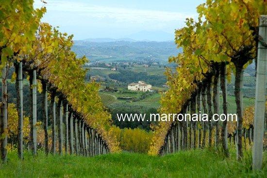 Podere La Marronaia Agriturismo: marronaia