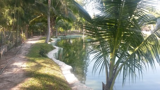 Hua Hin Fishing Lodge: Top Pond