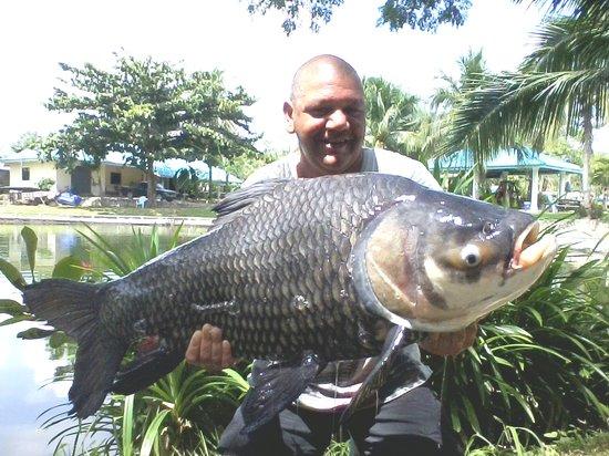 Hua Hin Fishing Lodge: Giant Siamese Carp