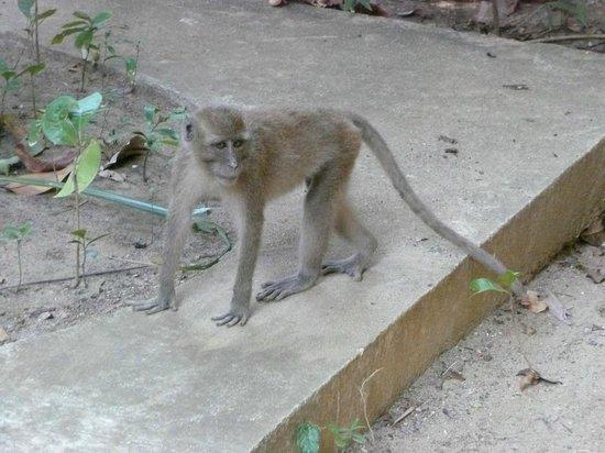 Mu Koh Lanta National Park: pesky monkeys