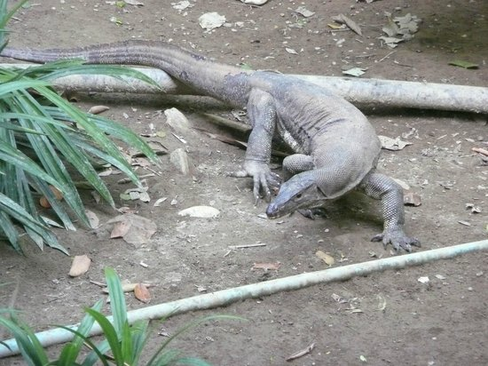 Mu Koh Lanta National Park: five-foot long lizards