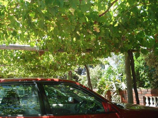 Swan Valley Perth's Valley of Taste: Estacionamento com parreiras.