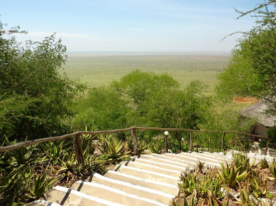 Lions Bluff Lodge: Stairs to Bandas from reception