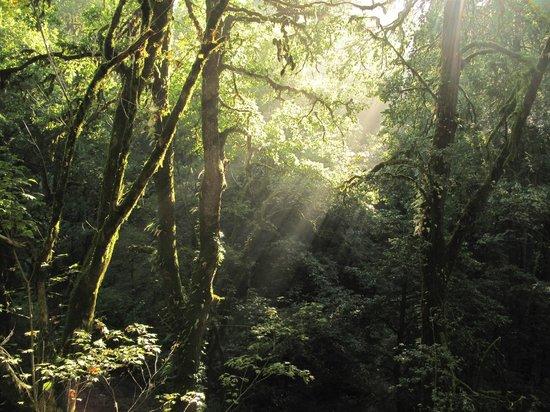 Jungle Lore Birding Lodge  Pangot  Uttarakhand