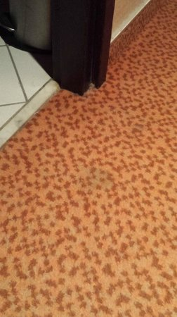 Hilton Strasbourg : Stains on the old carpet