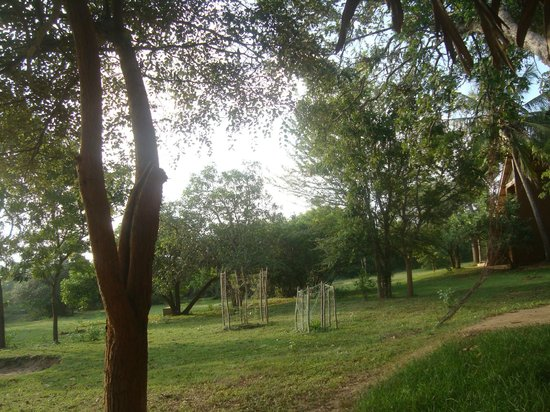 Back of Beyond - Kahandamodara: The gardens exclusively on the side of cottage