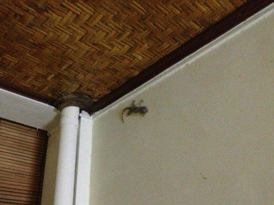 Un's Hotel: Наш номер был на первом этаже и к нам иногда заглядывали вполне безобидные гости