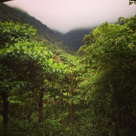 El Silencio Lodge & Spa : view from our viewing platform