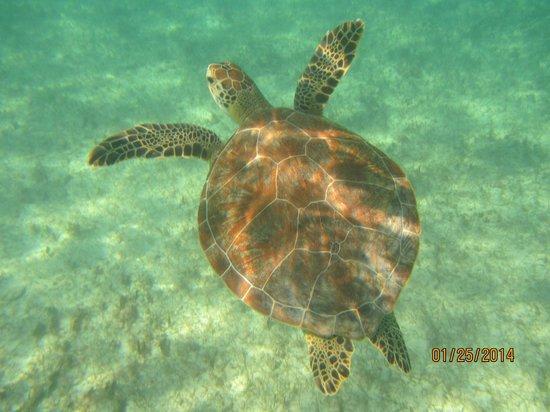 Grand Sirenis Riviera Maya Resort & Spa: Regular swimming partner