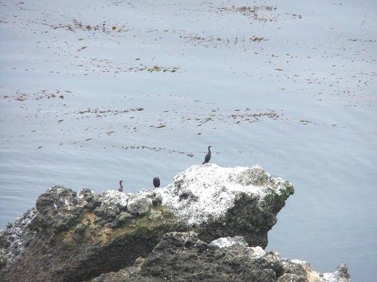 Point Lobos State Reserve: Всем хорошо!