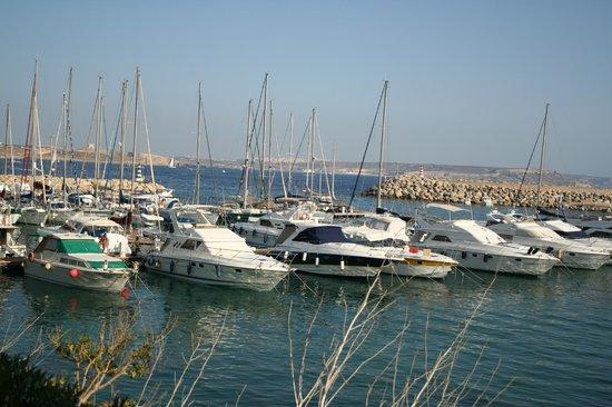Narcisa Bed & Breakfast: Mgarr marina