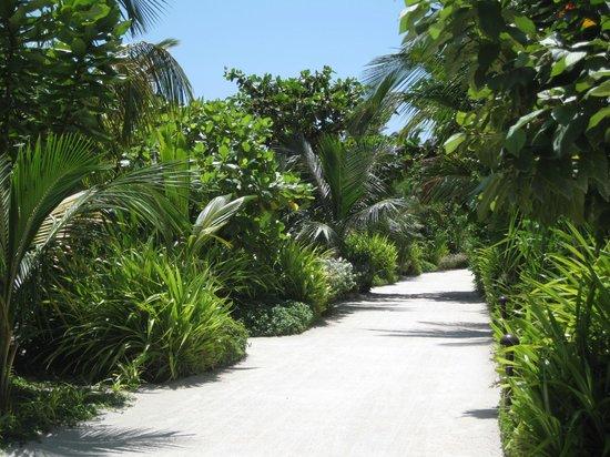 The Residence Maldives : Une allée de l'île