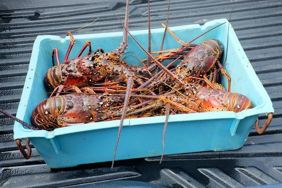 Pagua Bay Bar and Grill: Fresh Lobster