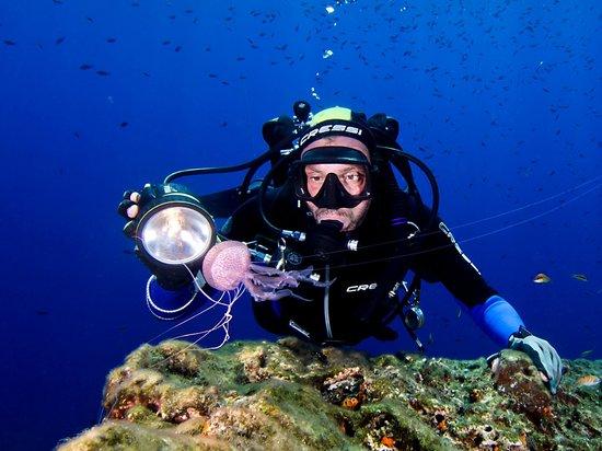 Terraferma Diving