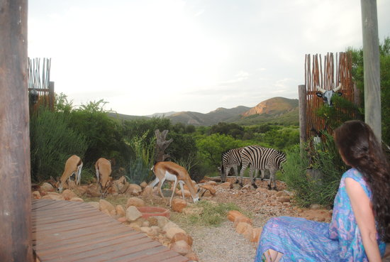 Zwartberg View Mountain Lodge: the animals all come to meet the people