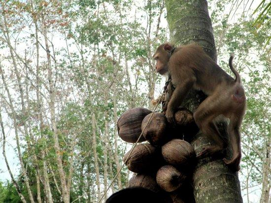 JC Tours : monkey show