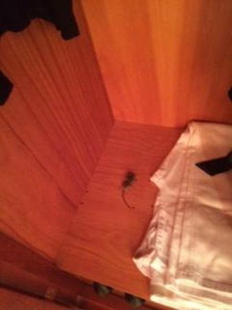 Be Live Family Costa los Gigantes: Dead mouse in wardroom