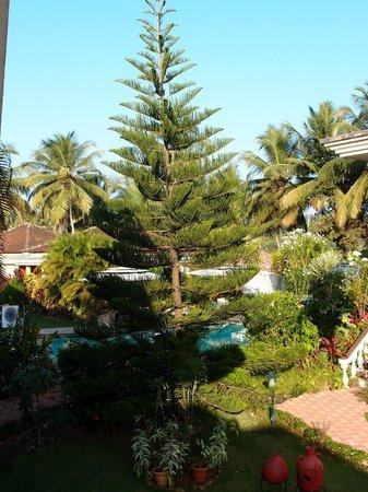 Coconut Grove: Новый год в отеле