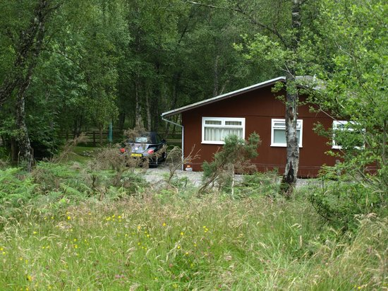 Torcroft Lodges: dog walk behind lodge