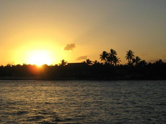 Seahorse Sailing: Beginning of sunset