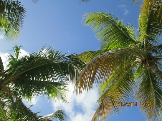 The Buccaneer St Croix: View looking up from my lounge chair